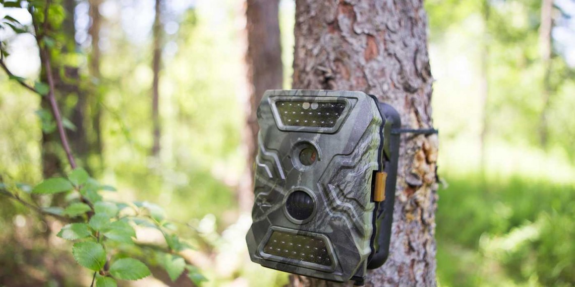 Camera traps attached by straps on a tree